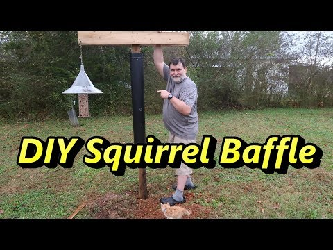 DIY Squirrel Baffle - Bird Feeding Station With Cute Kitten