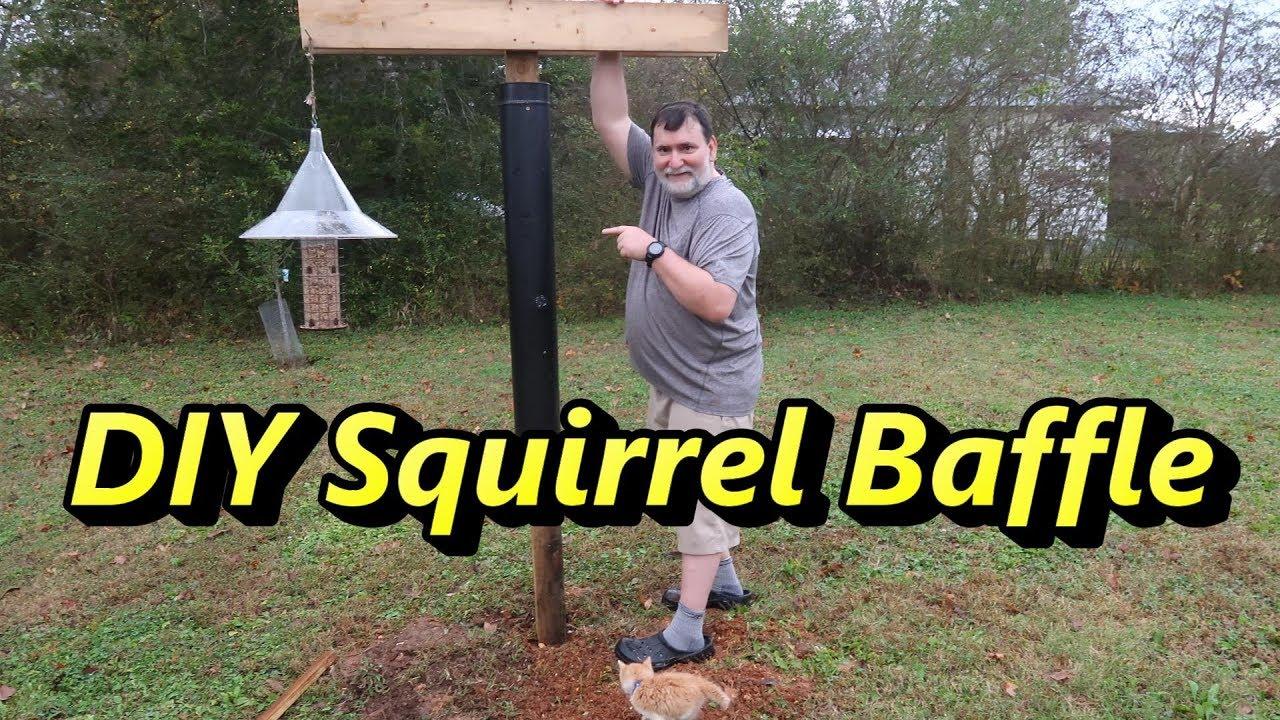 Diy Squirrel Baffle Bird Feeding Station With Cute