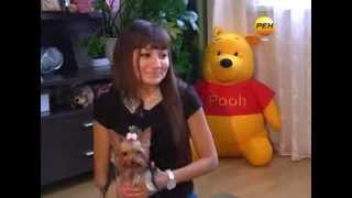 Порода собак - йоркширский терьер. Воспитание (Фото, видео)