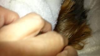 我が家のワンコたちの中で一番寝坊助のアンジーです(*^^*)