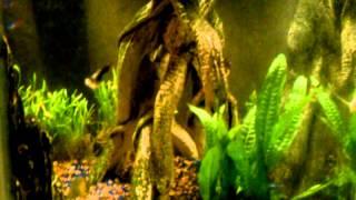 Freshwater aquarium. 44 gallons