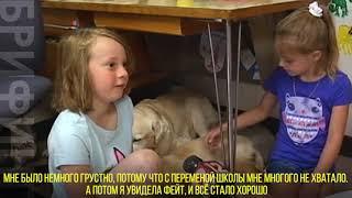 Собаки в школе – учеба без стресса