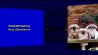 Dog Trainer Video Infomercial Internet Marketing Services