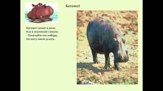 где живут слоны презентация 1 класс