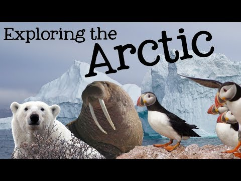 Exploring the Arctic for Kids: Arctic Animals and Climates f