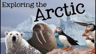 Exploring the Arctic for Kids: Arctic Animals and Climates for Children - FreeSchool
