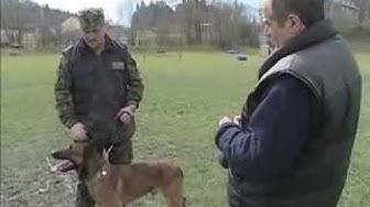 Achat, instruction de base et remise des chiens au nouveau conducteur de chien