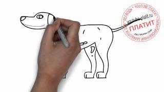 Как нарисовать собаку поэтапно карандашом(Как нарисовать собаку поэтапно простым карандашом за короткий промежуток времени. Видео рассказывает..., 2014-06-27T06:56:25.000Z)