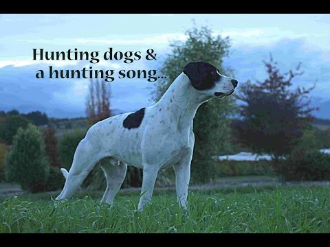 Hunting Dogs & A Hunting Song.