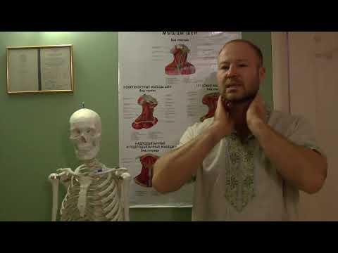 Упражнения при спазме передних (лестничных) мышц шеи. Скаленус синдром