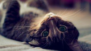 Мешает ли кошка духовной жизни?