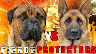 Bullmastiff vs German Shepherd | German Shepherd vs Bullmastiff | Powerful Guard Dog | Billa Boyka |