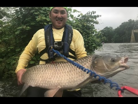 giant for real first fish on curado k youtube