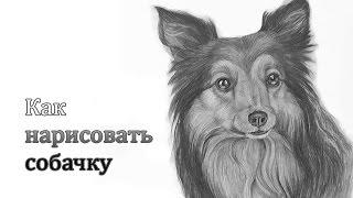 Уроки рисования. Как нарисовать СОБАКУ карандашом How to Draw a DOG(Многие из нас очень любят собак, и многие хотели бы нарисовать любимую собаку, ведь у них такие преданные..., 2015-04-10T16:28:37.000Z)