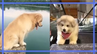 Dog Workout Funny - Best Dog Videos