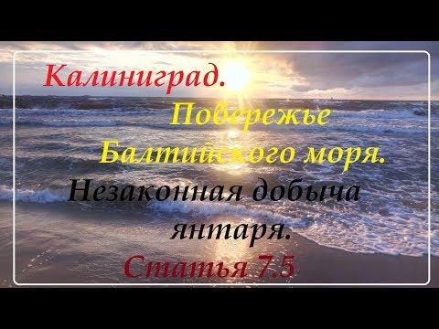 Калининград.Балтийск.Поиск янтаря на берегу моря.Выброс.
