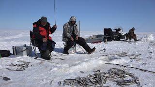 Зимняя рыбалка корюшки в лимане Амура напротив Сахалина
