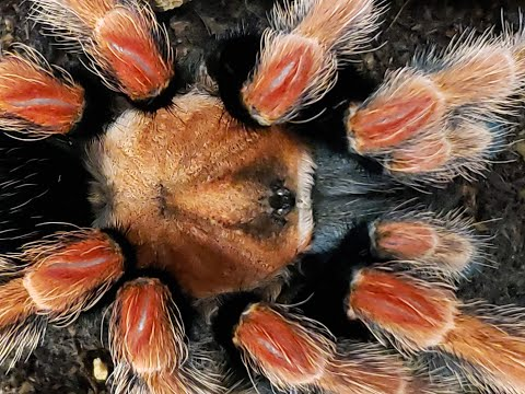 Arachnid Diversity - Eight-legged Diversity: Spiders and Their Kin