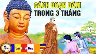 Hòa Thượng chỉ cách ĐOẠN DÂM chỉ trong 3 tháng - Kể Truyện Nhân Quả Phật Giáo cực hay