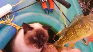 Kitty Kayak Christmas Fishing 4 Species @ Miami Hammocks Lake