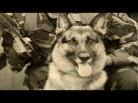 Animal Heroes | Storyteller Media