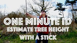 How to Estimate tнe Height of a Tree using a Stick. One Minute ID