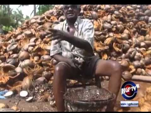 GUYANA TO BENEFIT FROM COCONUT EXPANSION PROJECT