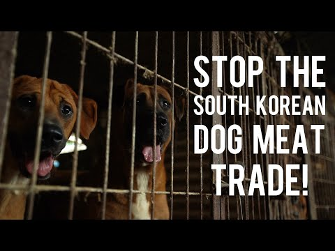Celebrities Speak Out – Stop the South Korean Dog Meat Trade!