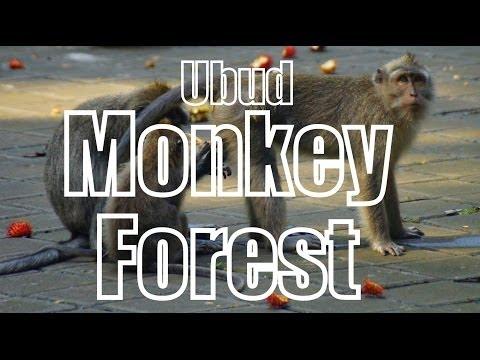 UBUD MONKEY FOREST - Bali, Indonesia