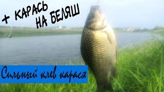 Рыбалка на карася активный клев карася в метре от берега Поплавочная удочка на карася