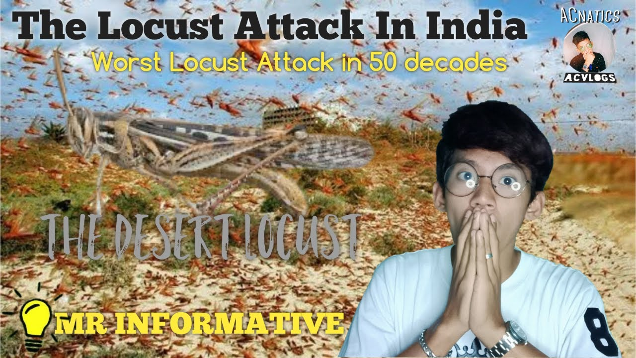 Locust Attack In INDIA   Worst Locust attack   What are ...