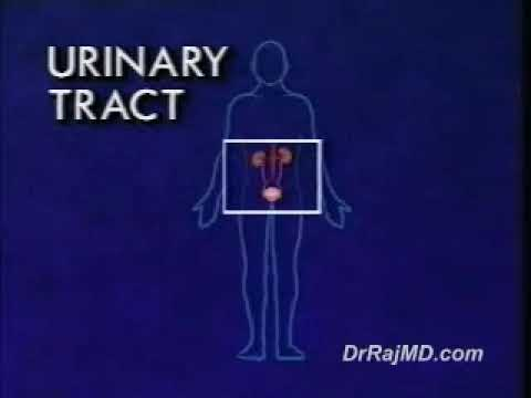 Male Urinary System - YouTube