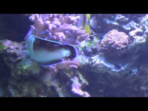 Oceanarium Gdynia 19 06 15