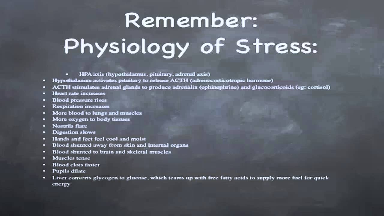 Stress, Allostasis & Allostatic Load  Spirituality And. How To Stop Feeling Suicidal Tlc St Louis. Business Email Template Alex Hanna In Hialeah. Internet Providers Parker Co Can Bees Bite. Online Security Awareness Training. Insulation Contractors Houston. Employers Seeking Employees Free. Associates Degree In Criminal Justice Online. Jeep Dealership Alabama Car Insurance Erie Pa