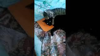Мои кошки любят друг друга!!!