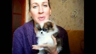 Что давать собаке от глистов ?