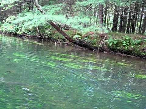 Jeq1966 kayak trout fishing at the swift river youtube for Swift river fly fishing
