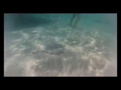 Круиз по Карибскому морю. Гранд Кайман