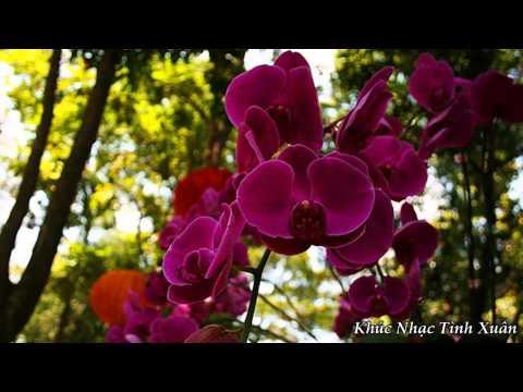 Khúc Nhạc Tình Xuân - Nini