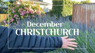 뉴질랜드 12월 크라이스트처치 / 헤글리파크/생일에 가…