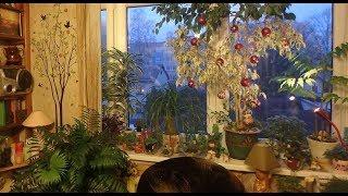 комнатные растения в феврале - 2019 год