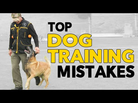 3 MISTAKES Dog Trainers Make and How to AVOID Them:   #1 Stay to Recall - Dog Training Videos