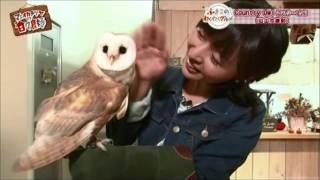 しあわせをよぶフクロウカフェ Country Owlが「マエオカテツヤの日々良好」で紹介されました。