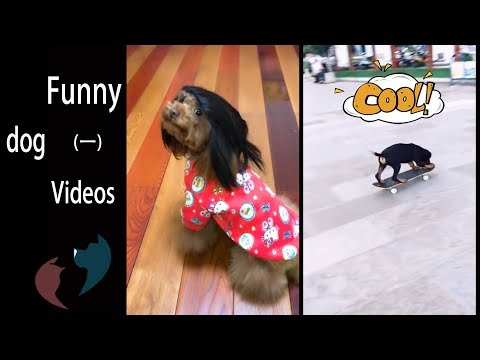 Funny dog's daily life 1 - Funny dog videos comilation - try not to laugh cute dogs