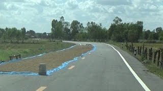 Drying rice on the highway in rural Thailand