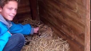 Will's Wild Animal Encounters at Hoo Farm - 1/11/2015 44