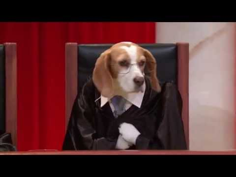 McCutcheon v. Federal Election Commission: Real Animals, Fake Paws