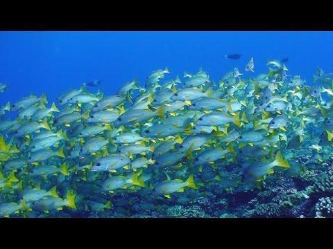 Tauchen in Fakarava - ein Südsee Traum wird wahr!