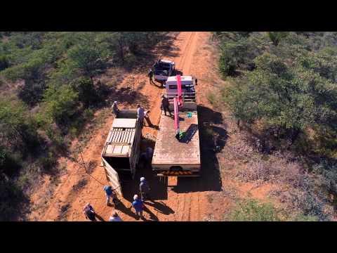 Rhino relocation June 2014