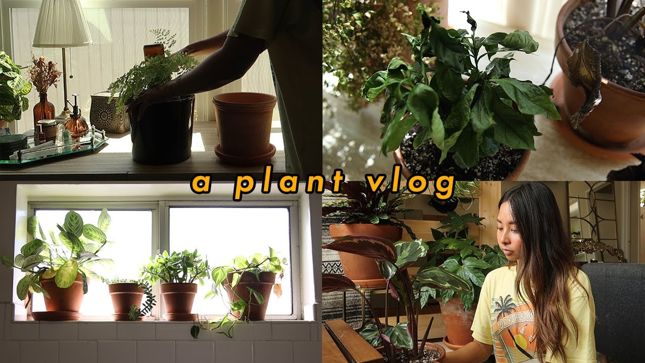 plant vlog: i left my plants alone for two weeks